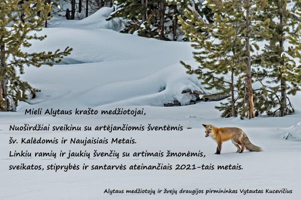 Mieli Alytaus krašto medžiotojai, Nuoširdžiai sveikinu su artėjančiomis šventėmis – šv. Kalėdomis ir Naujaisiais Metais. Linkiu ramių ir jaukių švenčių su artimais žmonėmis, sveikatos, stiprybės ir santarvės ateinančiais 2021-tais metais. Alytaus medžiotojų ir žvejų draugijos pirmininkas Vytautas Kucevičius